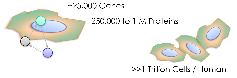 Cells_Stats