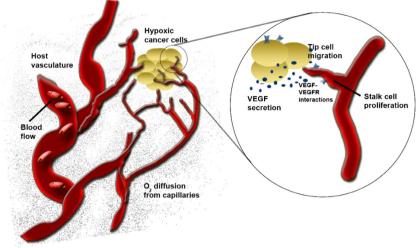 AngiogenesisModels_Qutub_2012.png